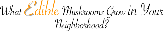 What Edible Mushrooms Grow in Your Neighborhood?